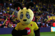 The man who kicked the Hornet's nest: Big Sam says Watford mascot was 'out of order'