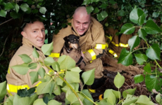 You've heard of rescuing cats from trees but firefighters yesterday got a dog from a bush