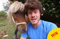 An Irish guy in New Zealand is raising funds for a pony's surgery after seeing it get attacked