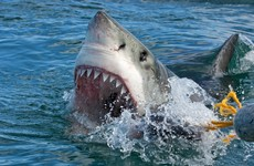 Man left in freezing shark infested water for six hours after being dragged out of boat by fish