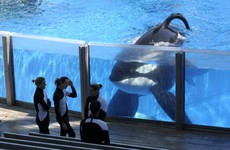 Tilikum, SeaWorld whale that killed trainer, dies