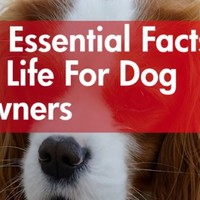 14 essential facts of life for dog owners