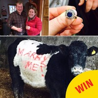 A farmer from Tyrone proposed to his girlfriend by spray-painting 'MARRY ME?' on a cow
