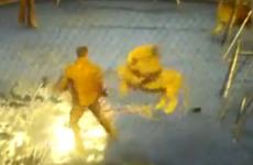 Video captures lions mauling Ukranian circus tamer
