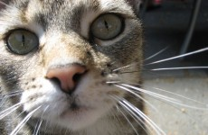 Seven lives left? Cat survives two attempts to put her down