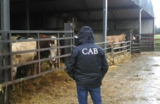CAB seize 125 cattle after 11-year investigation into Kilkenny farmer