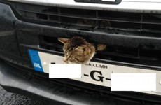 Driver thinks he's being stopped for speeding - has cat stuck in engine grille
