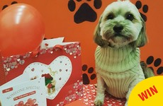 This doggie daycare in Wicklow had an adorable Valentine's Day party for the pups