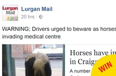 Many congrats to the people of Armagh for all of the inevitable horse puns