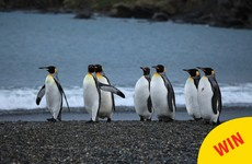 "Galway wants to open Ireland's first 'penguinarium' so penguins can ""hang out"""