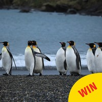 """Galway wants to open Ireland's first 'penguinarium' so penguins can """"hang out"""""""
