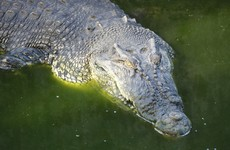 """Savage behaviour"": Crocodile stoned to death by visitors at Tunisia zoo"