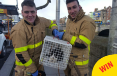 A cat was saved from the Liffey by the fire brigade and there were wonderful scenes