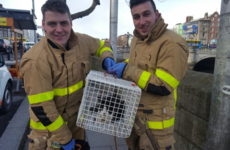 Dublin firefighters have rescued a cat from the Liffey