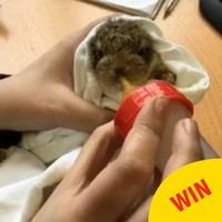 Look at this tiny hare that was rescued after being dropped by a bird near Dublin Airport