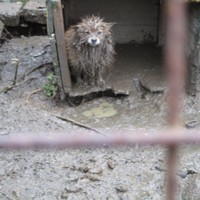 'Hungry, thirsty, filthy': Woman fined �2,500 after dogs discovered in horrendous conditions