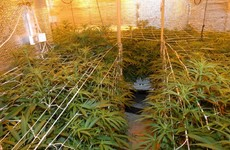 Gardaí seize cannabis plants worth €200,000 in Mayo
