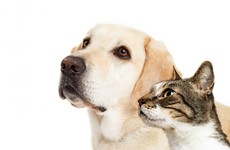 After spate of animal cruelty cases, Taiwan has decided to ban the eating of cats and dogs