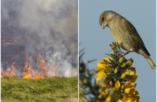 Farmers defend 'extreme and irresponsible' gorse bush burning as best practice