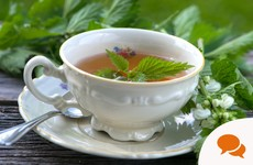 Fancy a nettle tea? Spring nettles are abundant right now and have lots of health benefits