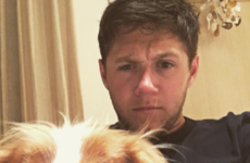 Niall Horan says he feels 'out-Irished' by ginger Ed Sheeran... It's the Dredge