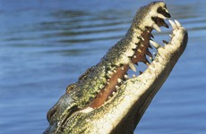 Man suffers multiple bite wounds in saltwater crocodile attack