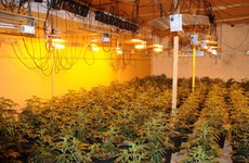 Gardaí uncover large cannabis grow house and seize €1.5m-worth of plants