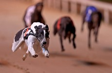Breeders say they will talk about bringing greyhound racing back to Dublin