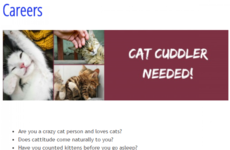 This veterinary hospital in Dublin is looking for a 'cat cuddler' to join their team
