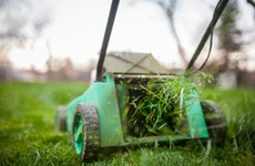 Poll: How often should you bother to cut the grass?