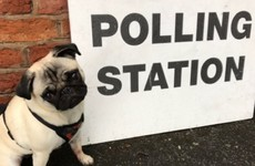 Once again the adorable #DogsAtPollingStations hashtag is the best thing about UK election day