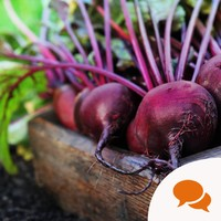 Gardening: Pick your beetroot early for summer salads and slaws