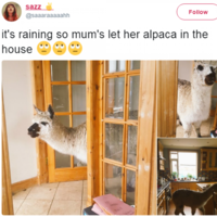 17 wholesome and pure tweets that will cheer you right up