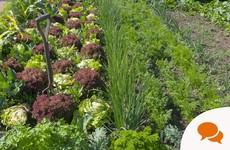 July Gardening: 'This is the start of a super-abundant period in the veg patch'