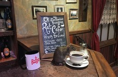 'They're very affectionate': Rat cafe opens in San Francisco