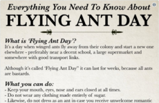 They're back... Have you noticed the swarms of flying ants?