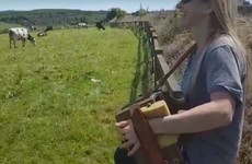 Sharon Shannon played trad in a field for a massive herd of cows and it was the most Irish thing ever