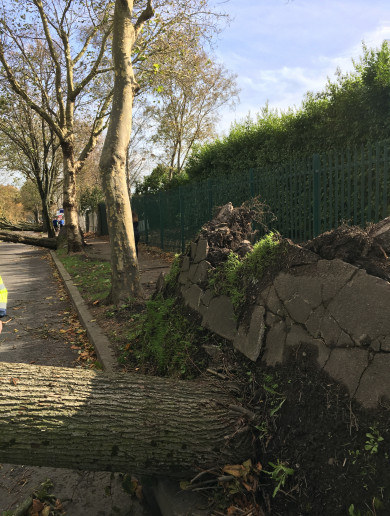 'It was like driving through a war zone': Cork picking up the pieces after Storm Ophelia