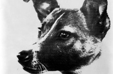 'I cried as I stroked her for the last time' - It's 60 years since Laika became the first creature in space