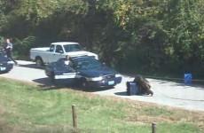 Escaped chimp attacks US police car (video)