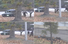 Dramatic video shows North Korean soldier being shot as he attempts escape across border