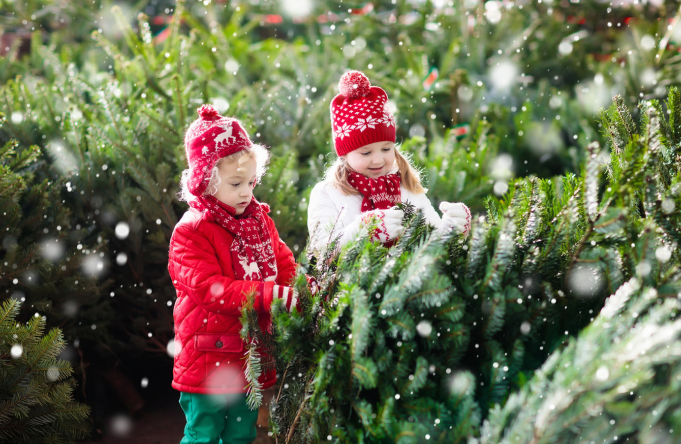 Buying your Christmas tree this weekend? Here\'s how to pick the ...