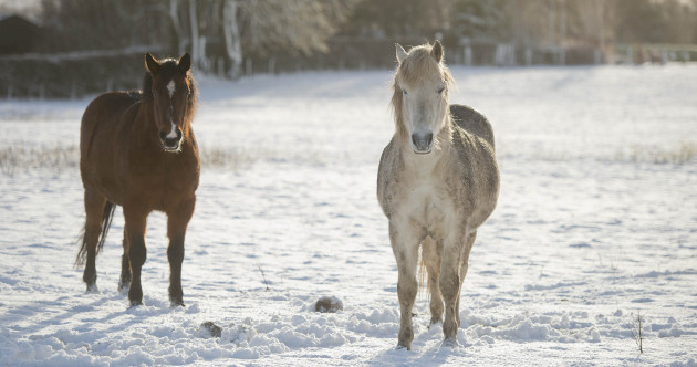 Pictures: Parts of Ireland were a little snowed under today