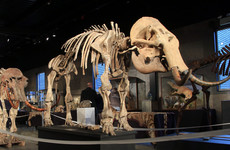 10,000-year-old skeleton of woolly mammoth sells for over €500,000 at auction