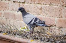 'War on wildlife': Bristol residents put spikes on tree to avoid birds pooing on cars