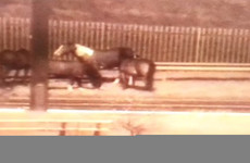 Commuters warned as a number of horses are on the loose near the M50