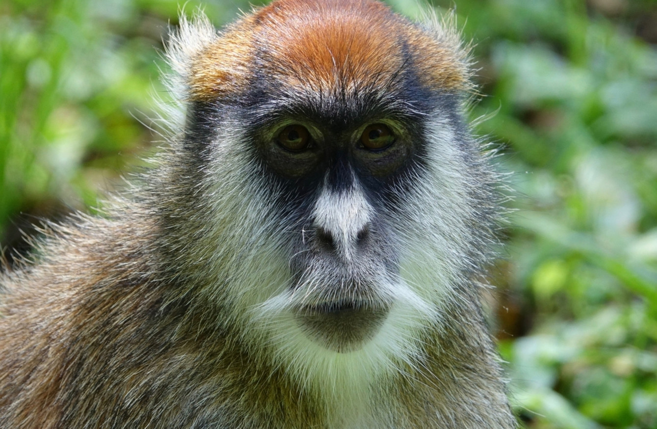 Monkeys Die In Fire At Safari Park In England TheJournalie - Monkey knows how to operate vending machine