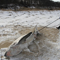 Shark froze to death as freezing cold continues to grip large sections of the US