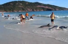 Beachgoers rescue stranded dolphins at Brazil beach