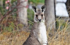 €10,000 reward for information about 'kangaroo' in nightclub